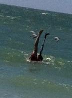 Handstand in the ocean